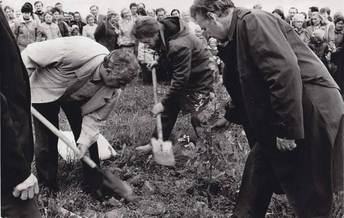 Tėviškėnų sambūris: ąžuoliuką sodina mokytojas Romualdas Paškevičius, dramaturgas Juozas Glinskis ir akademikas Bronius Grigelionis