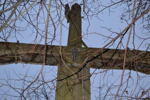 Kryžius Kazimierai Macelytei Jurgeniškių kaimo kapinėse