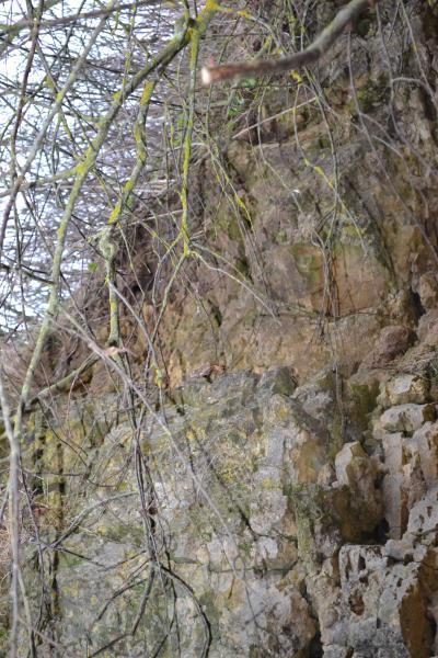 Skalių kalnas