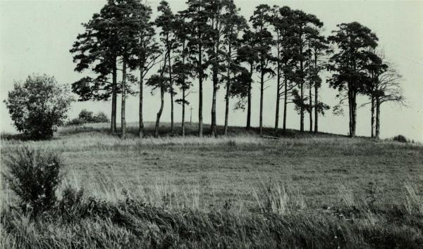 Lavėnų (Niurkonių) senkapis