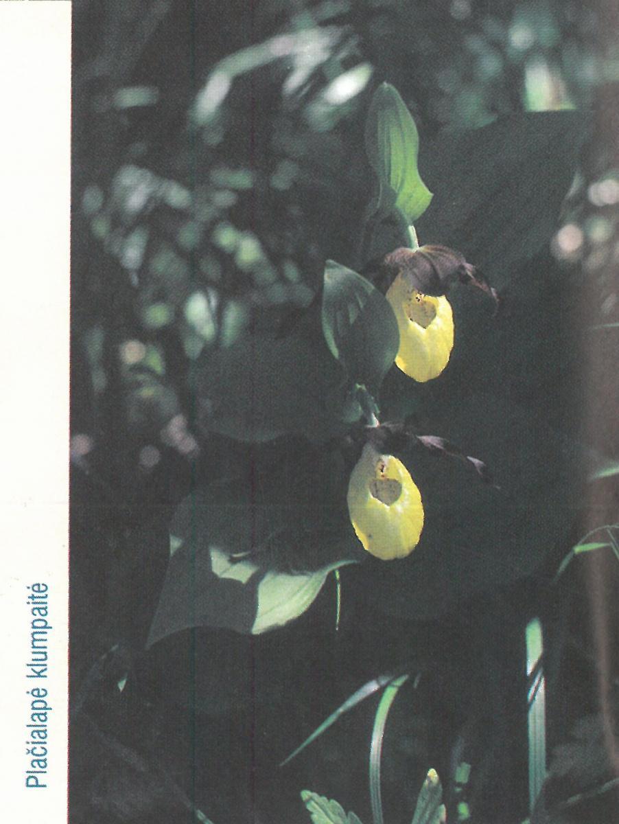 Lepšynės botaninis draustinis
