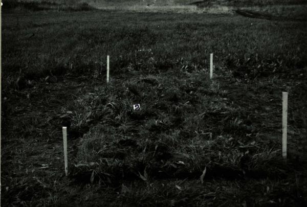 Kalneliškių senovės gamybos vieta