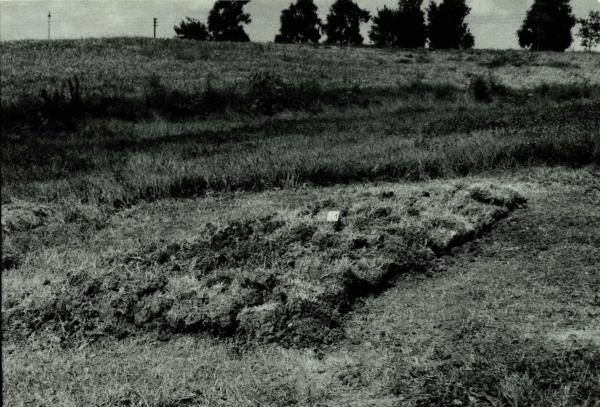 Vytartų senovės gyvenvietė