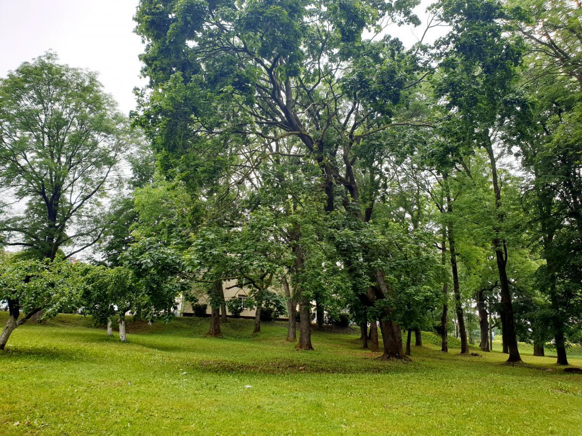 Pasvalio senosios klebonijos (Užupio) parkas